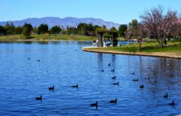 Cherry_blossoms_Lake_Balboa_(20140330-0316)